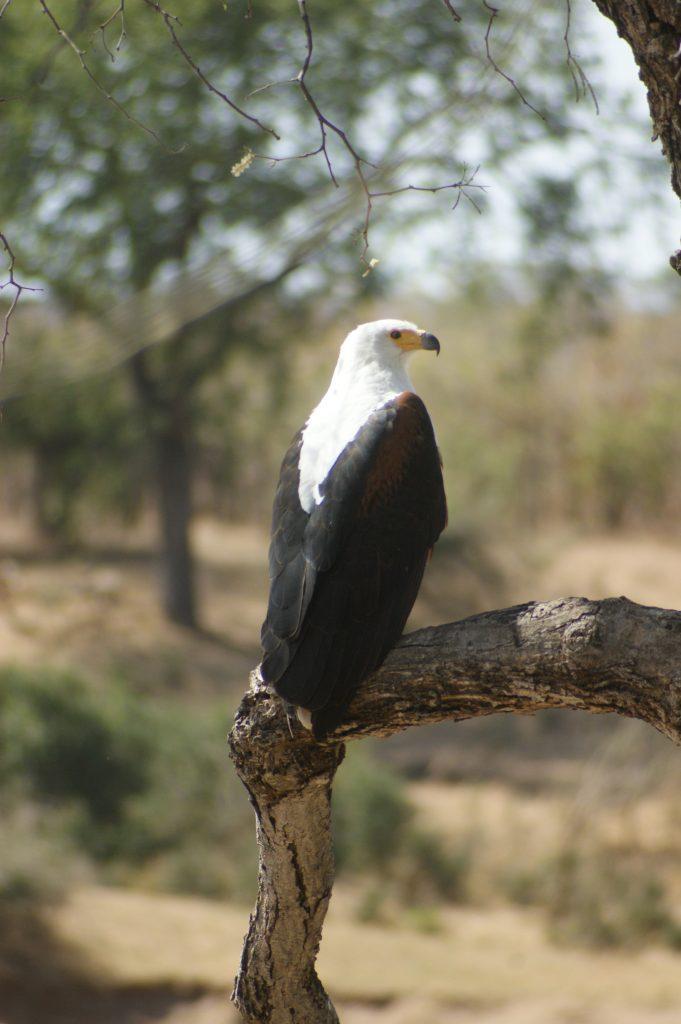 North Kruger Park